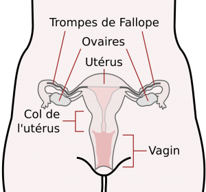 savoir periode ovulation